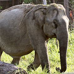Protect Endangered Asian Elephants at The Rainforest Site