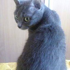 Саша  #cat