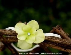 Green Single Hydrangea flower headband baby-adult sizes available-Great Photography Prop-Made to order. $7.50, via Etsy.