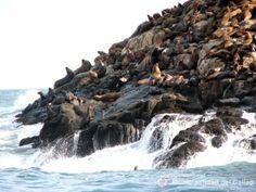 Islas Palomino - Lobos Marinos