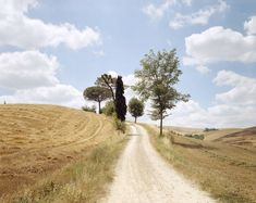 Joel Meyerowitz The White Road, Tuscany 2002  The lighting is one I was trying to mimic in my photographs. I also like how the grass isn't green or clean, it's been mowed but left out.