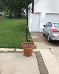 Dog Hides From Her Humans Behind Flowerpot - Find and Share funny animated gifs Funny Animal Videos, Cute Funny Animals, Funny Animal Pictures, Cute Baby Animals, Animal Memes, Funny Cute, Funny Photos, Funny Dogs, Animals And Pets