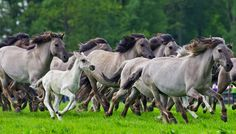 Wild Horses  by Friedhelm Peters  500px