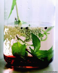 Winter Tincture Recipes to stave off ailments and speed recovery.