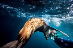 Swimming and Snorkeling with Sea Lions in the Sea of Cortez - TripAdvisor