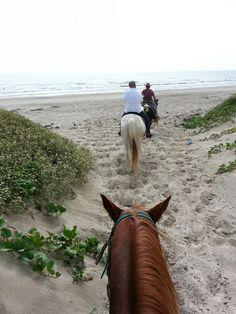 Mustang Riding Stables, Mustang Island, Corpus Christi, Texas Texas Vacations, Texas Roadtrip, Texas Travel, Family Vacations, Family Travel, South Padre Island, Padre Island Texas, Port Aransas Texas, Corpus Christi Texas