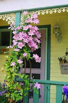 flowersgardenlove:  Sweet Porch Clematis Beautiful gorgeous pretty flowers
