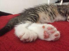 Pad pad♡v♡ #Kitten #Pad