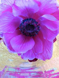 container gardening picture of anemone flower in a mason jar - Photograph © Kerry Michaels