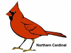 Are You Looking For Bird Coloring Pages Ive Collected A Number Of Links To Online Some The More Recognizable Common Backyard