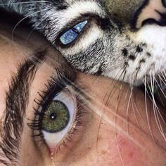 eyes, cat, and green image