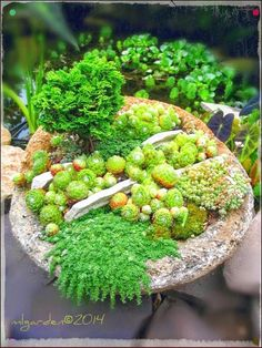 Easy DIY Container Gardening Projects you might consider for your outdoor spaces. Easy DIY Contain Rock Garden Plants, Diy Garden, Garden Projects, Garden Pots, Buy Flowers Online, Buy Plants Online, Container Gardening Vegetables, Container Plants, Gemüseanbau In Kübeln