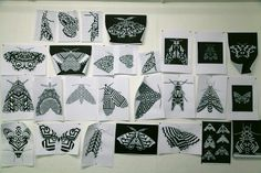 The Hastings Moths Project_Preparations