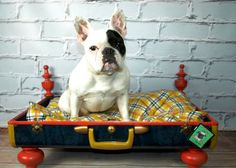 A bed with personality for your favorite four-legged pal.