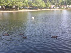 Composite view of the duck pond