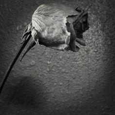 rose against concrete.