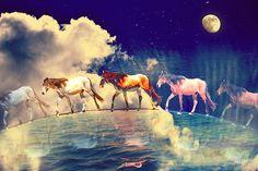 «Cavalli lunari» de Bizzartino