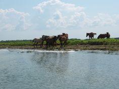 delta 4 Elephant, Animals, Animales, Animaux, Animal, Elephants, Animais