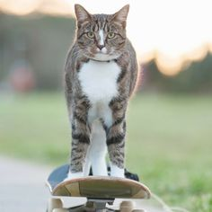 Didga the Skateboarding Cat