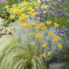 yes zone 7 Dry Garden, Garden Trees, Mexican Feather Grass, Helichrysum Italicum, Curry, Plantation, Yard Landscaping, Garden Projects, Dried Flowers