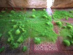 I grew grass on rugs in a castle. | Martin Roth - Art Projects