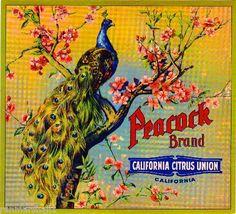 Peacock~ Orange Citrus Fruit Crate Label Art Print