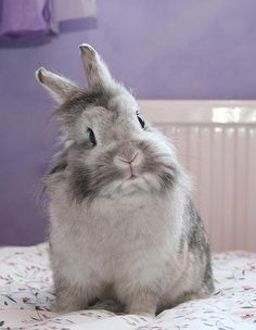 <3...Bunny rabbit - oh my, I just want to hold it, so adorable, want one!