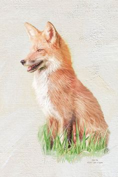 """New wildlife print """"Red Fox"""" by Iain S Byrne"""