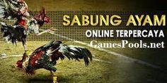 Agen Online Sabung Ayam Terbesar Terpercaya - Online Blackjack Informasi