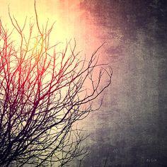 December Sun - Original fine art abstract nature tree photography by Bob Orsillo.  Copyright (c)Bob Orsillo / http://orsillo.com - All Rights Reserved.  Buy art online.  Buy photography online