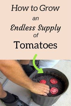 This incredibly neat idea could help you grow an endless supply of juicy tomatoe. - This incredibly neat idea could help you grow an endless supply of juicy tomatoes every time.