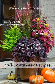 Celebrate fall by redoing pots using perennials and shrubs as the backbone, dolled-up with seasonal annuals. Come the snowy or rainy season, when the seasonal color is done but containers still look great, you'll be glad you chose plants for structure and Fall Flower Pots, Fall Planting Flowers, Fall Flower Gardens, Outdoor Fall Flowers, Outdoor Flower Pots, Flower Gardening, Flowers Garden, Fall Containers, Plants For Containers