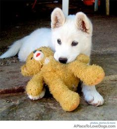 do you want to play with my teddy bear? •