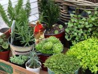 Wee Gardening