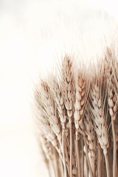 shades of wheat