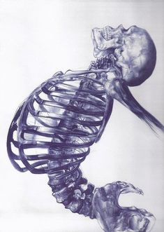 Human skeleton - ballpoint pen drawing by young artist Andrea Schillaci from Italy Skeleton Drawings, Human Skeleton, Cool Drawings, Skeleton Art, Skeleton Body, Sketchbook Drawings, Illustration Inspiration, Illustration Art, Medical Illustration