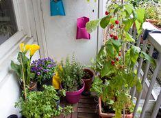 little garden - Google Search