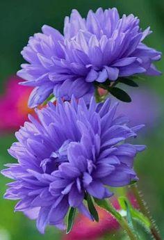 17 mais Pins para sua pasta Flores - angelamrcs@gmail.com - Gmail
