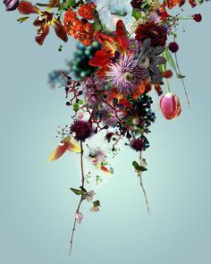 Fotografía floral
