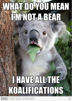 What do you mean Im not a bear!?
