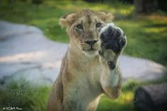 High 5!! Too slow!