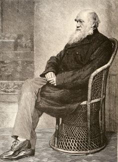 Charles-darwin-portrait-sitting-on-chair-sketch 2