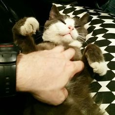 Loves his belly rubs!