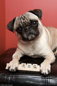 """PUG""  534 points!!  lol"