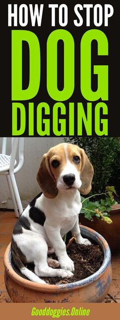 Here's how to stop your dog digging in the yard. Check out these dog training tips. #dogs #digging via @KaufmannsPuppy #DogsTraining
