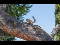 National Geographic - Squirly Squirls - Documentary HD