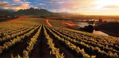 Sample some fine wines on a Cape Town Winelands Tour.