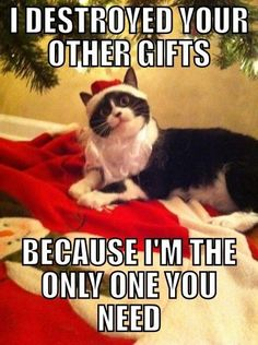 Are you looking for funny Merry Christmas memes? This year, super charge the holiday with 100 funny memes that will make your Christmas every more joyful. Christmas Animals, Christmas Cats, Christmas Humor, Christmas Quotes, Christmas Pictures, Cute Funny Animals, Funny Cute, Cute Cats, Funniest Animals