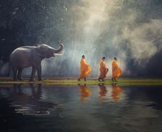 https://flic.kr/p/UEc6eC | ELP_1375 | Thailand Buddhist monks walk collecting alms with elephant is traditional of religion Buddhism on faith Thai people