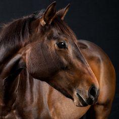 Horse / Peter Samuels